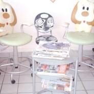 Achat/Vente Toilettage/Vente chiots à Miami